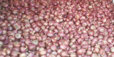 Improved Onion Varieties Bhima Super-Aptso exports