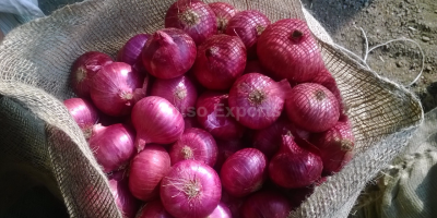 Rose Onion -Aptso exports